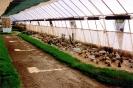 Výstava Čimelice 2002_54