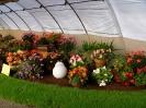 Výstava květin Čimelice 2004_10