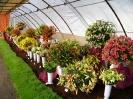 Výstava květin Čimelice 2004_13