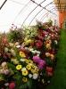 Výstava květin Čimelice 2004_14