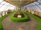 Výstava květin Čimelice 2004_15