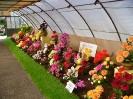 Výstava květin Čimelice 2004_17