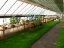 Výstava květin Čimelice 2004_24