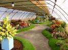 Výstava květin Čimelice 2004_7